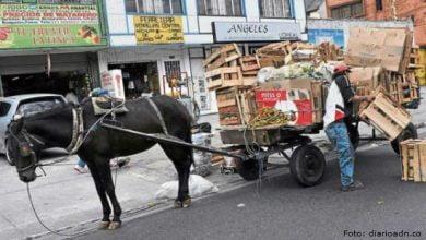 se prohíbe el uso de vehículos de tracción animal